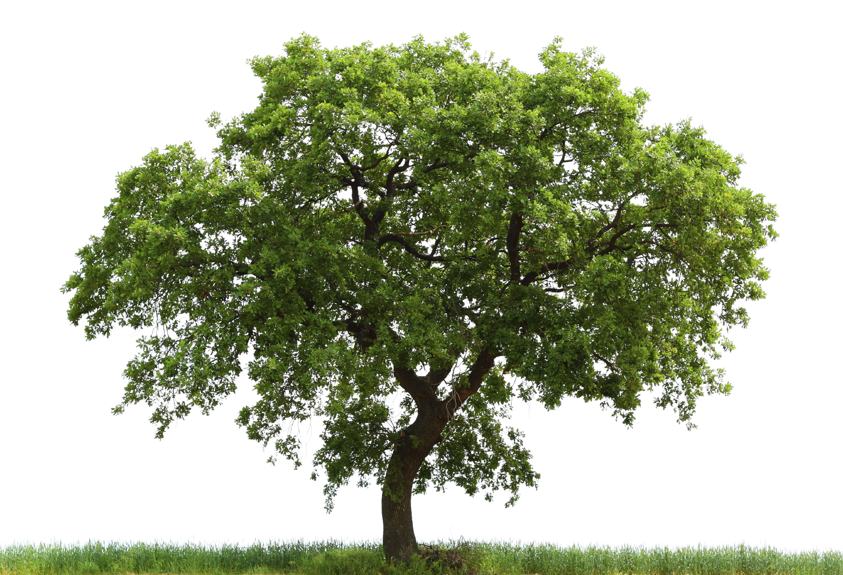 Trees Of Life Sustainable Development And Biodiversity Protection Nyscc